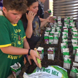 IMAGE: Students planting seeds in potting soil placed in recycled milk cartons.