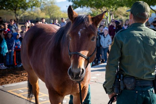 IMAGE: Brown horse stands next to border patrol agent in uniform with children in the distance.