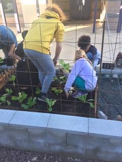 IMAGE: Students planting in garden.